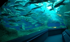 Read more Oceanarium, beginning at 11.00, 13.00, 16.00