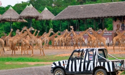 Read more Safari Park Bangkok