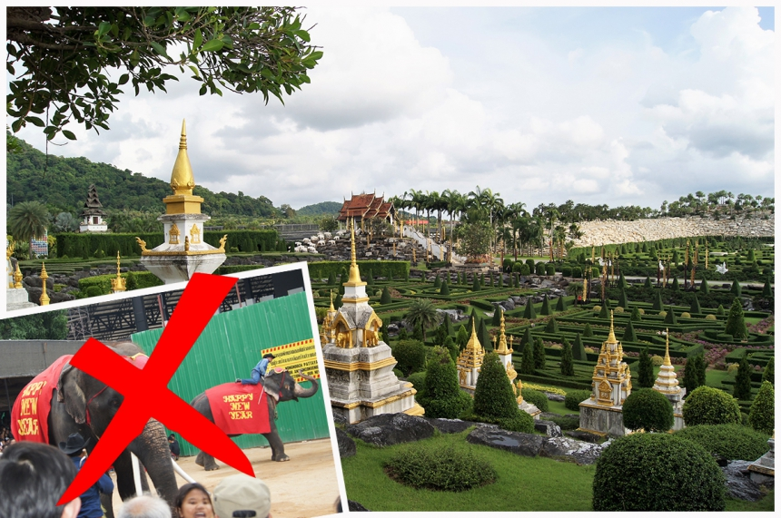 Nong Nooch without two shows