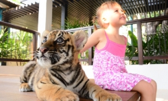 Read more Nong Nooch and the Tiger Park