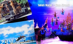 Read more Safari Park and show Siam Niramit with a buffet